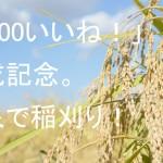 「5,000いいね!」記念企画。五泉で稲刈り!